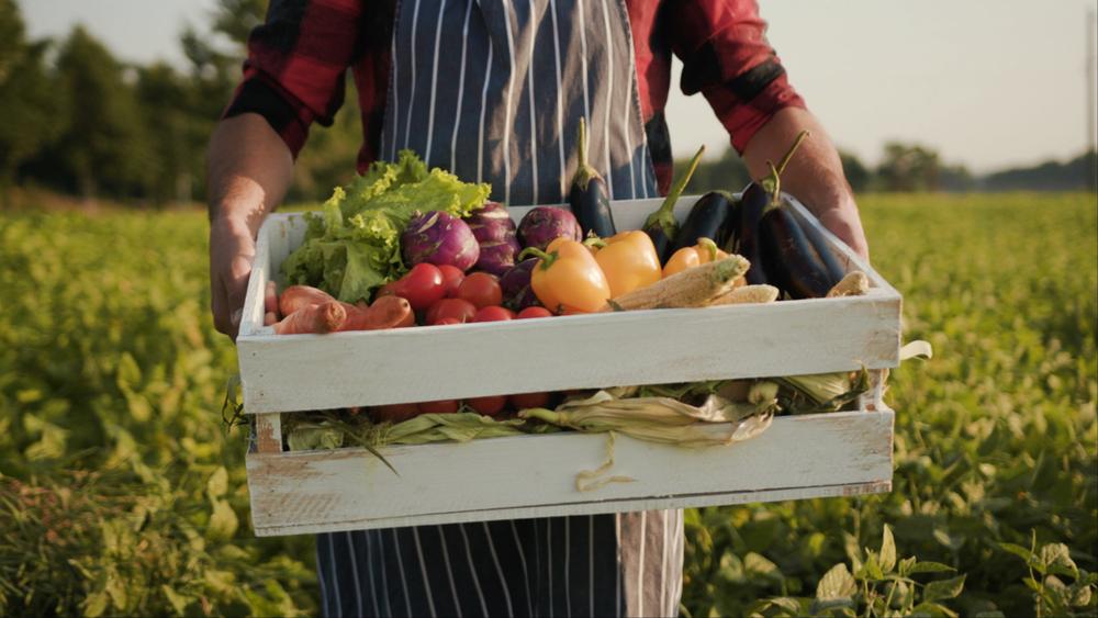 Organic Farming Vegetables
