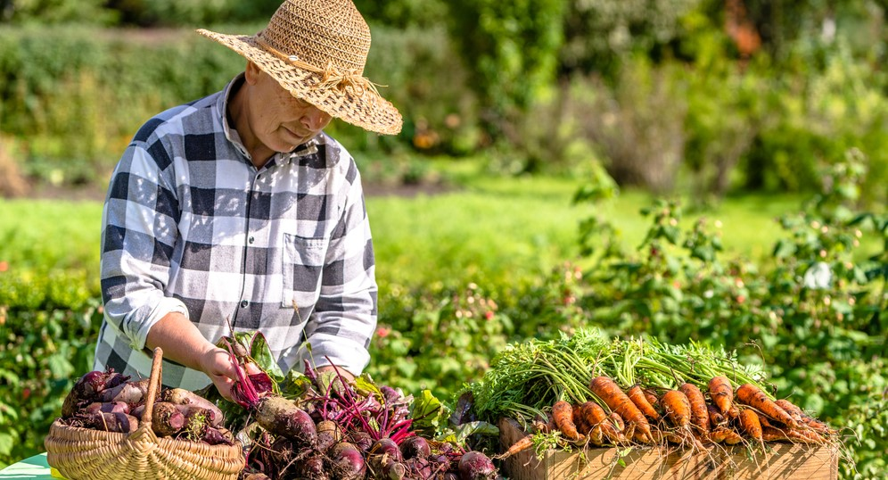 Organic Food Farming